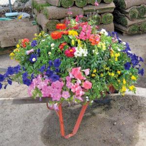 Robins Flowers wheelbarrow