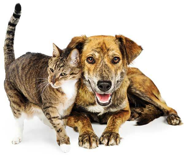 Wishbone Pet Rescue Alliance
