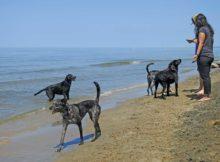 Kirk Park Dog Beach