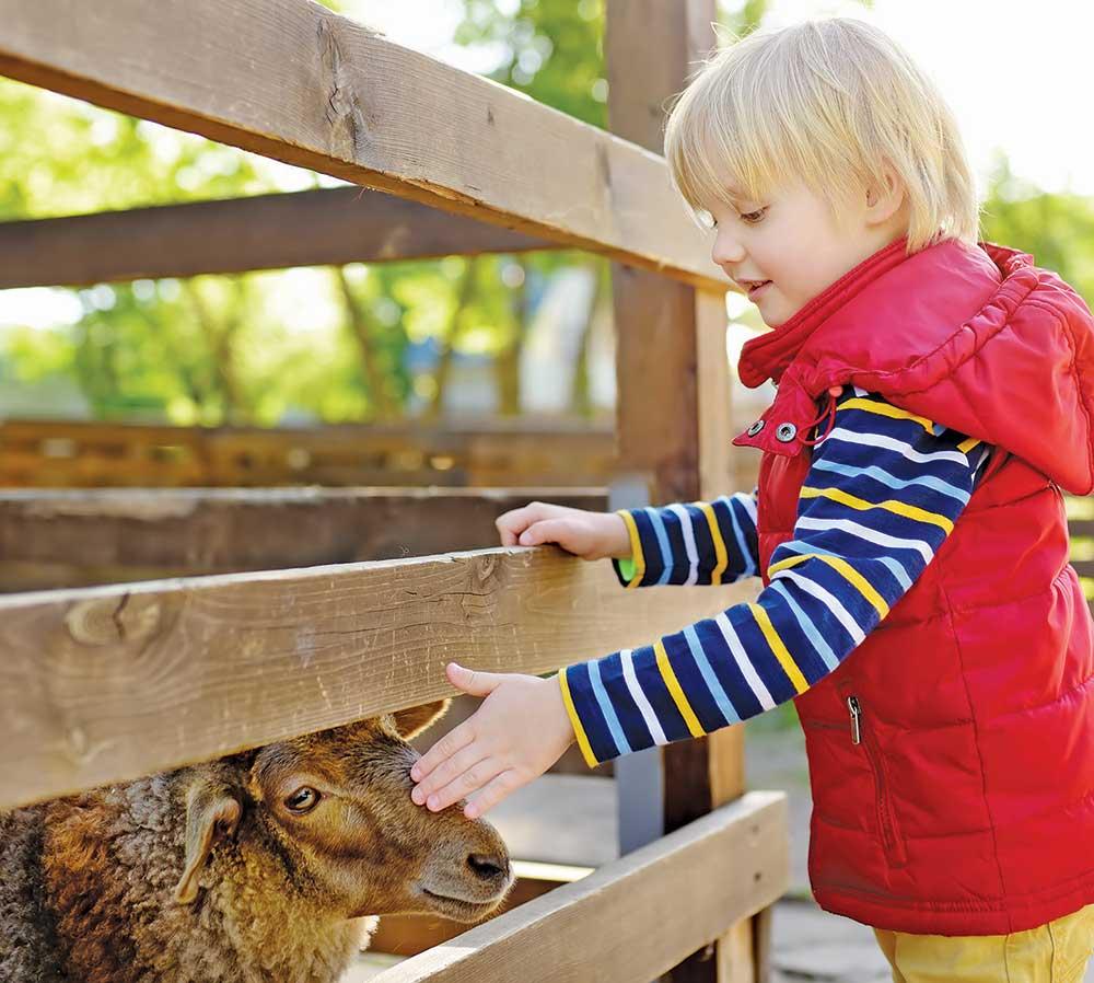 Critter Barn, Zeeland