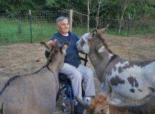 Fellinlove Farm donkeys